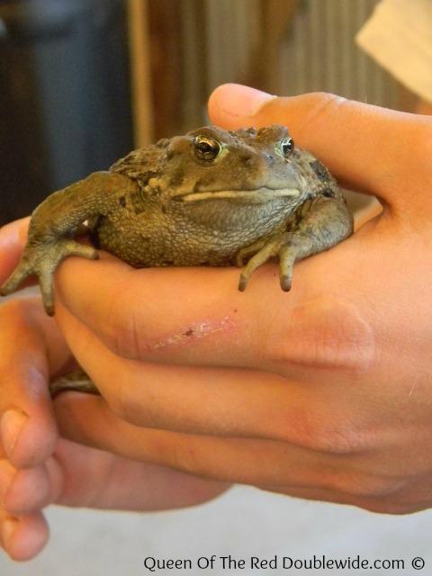 June 2013 Toad