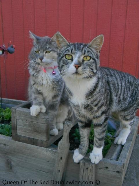 June 2013 cats