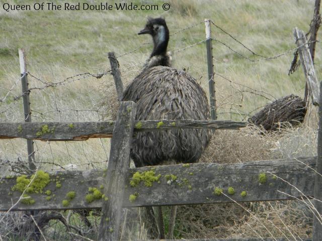 Emu 5