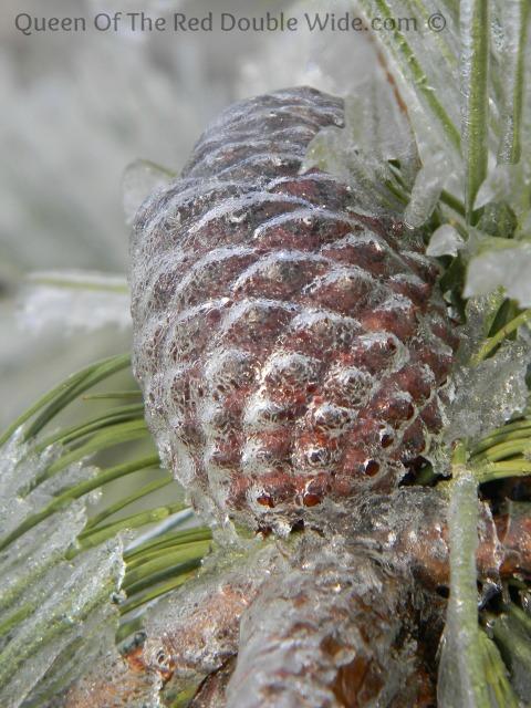 pine cone ice