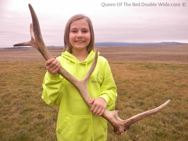 elk shed