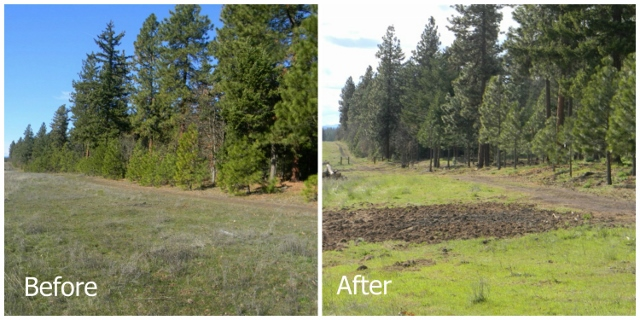 Forest thinning in Klickitat County, WA